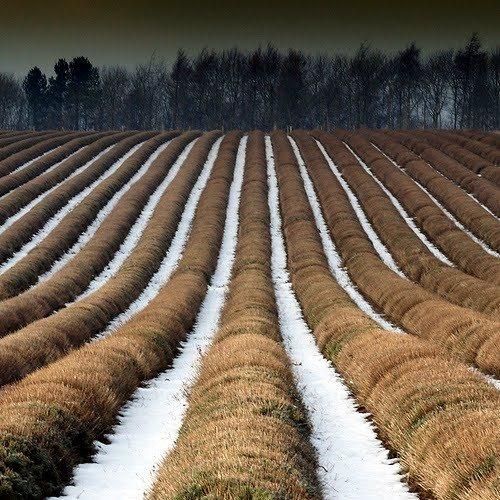 snowy fallow field