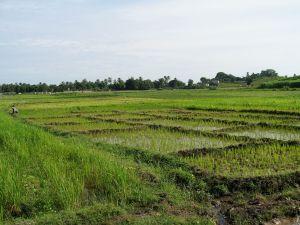 haiti field