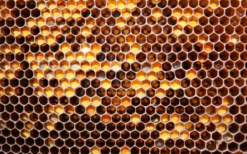 honey_honeycomb_w1