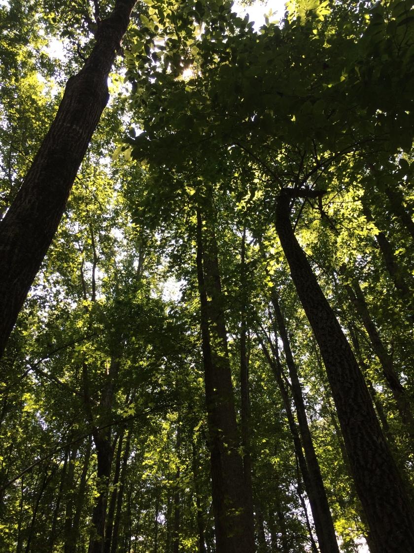 Tall Trees, Peachtree City, Georgia