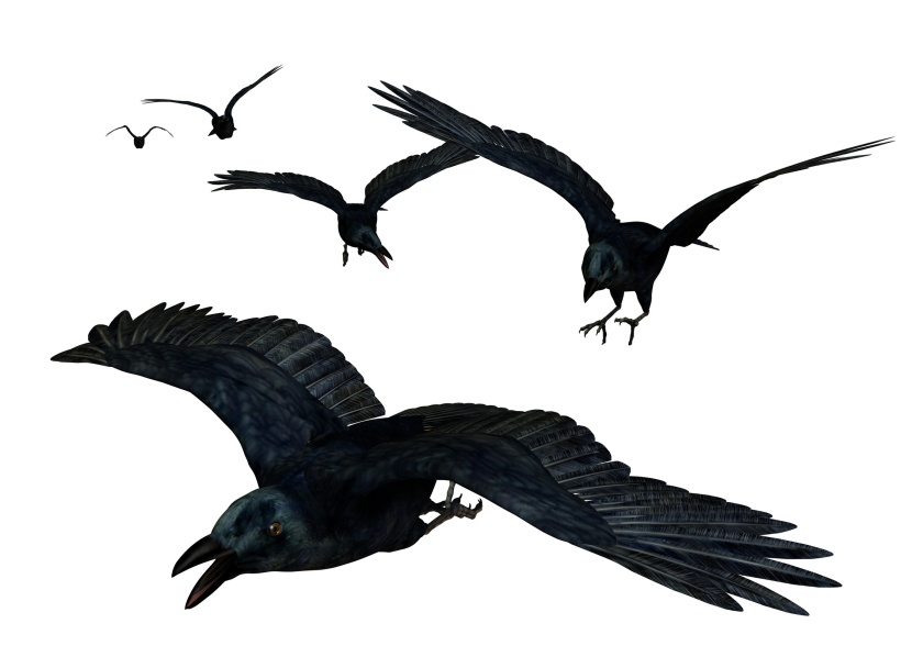 """Crows Flying"" by British Pest Control Association via Flickr"